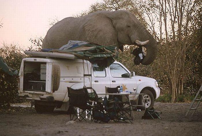 elephant-revision-03