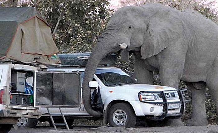 elephant-revision-04