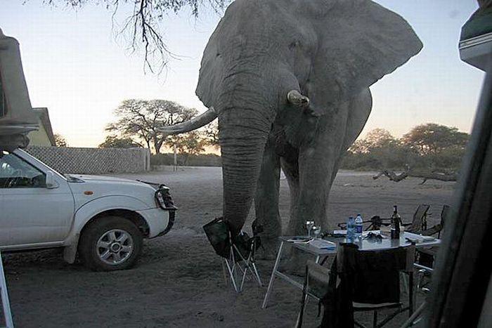 elephant-revision-05