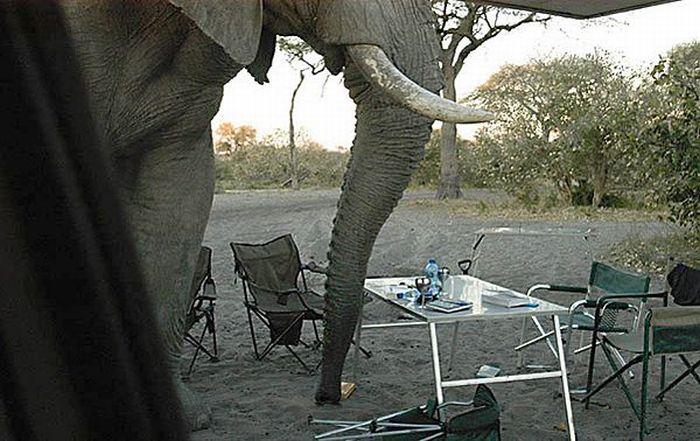 elephant-revision-06