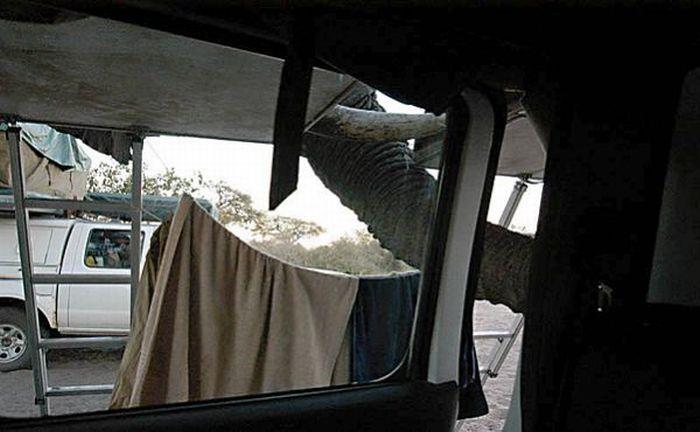 elephant-revision-07