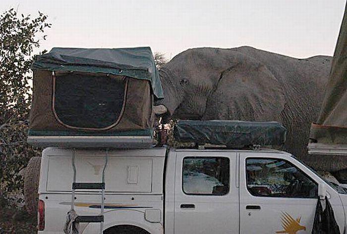 elephant-revision-08