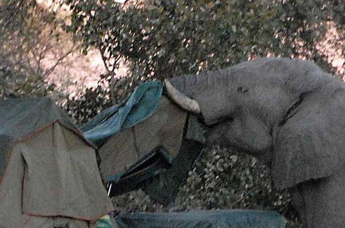 elephant-revision-09
