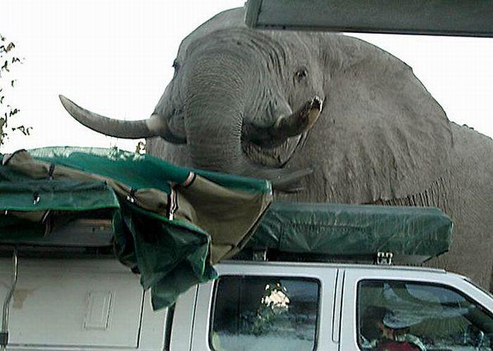 elephant-revision-10