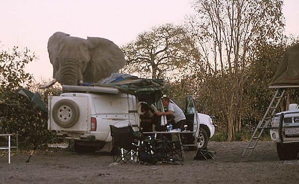 elephant-revision-11