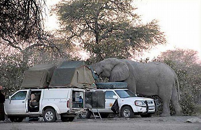 elephant-revision-12