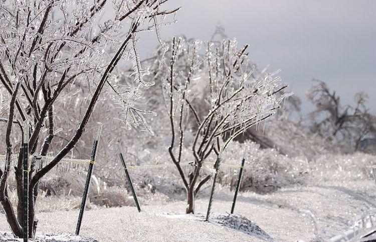 ice-storm-arkansas-03