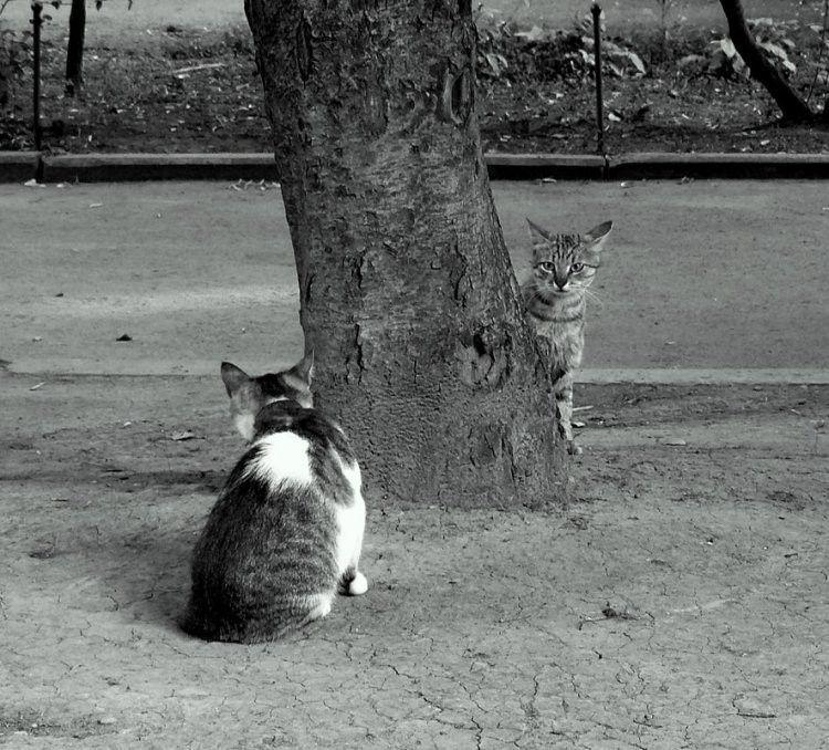 prikolnie-foto-180209-11