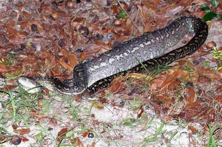 snake-dinner-06