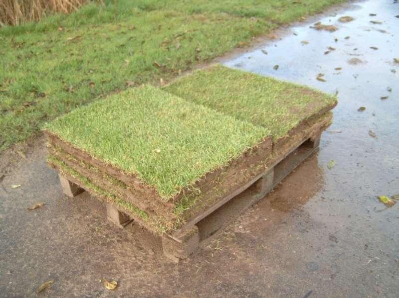 tram-on-grass-05