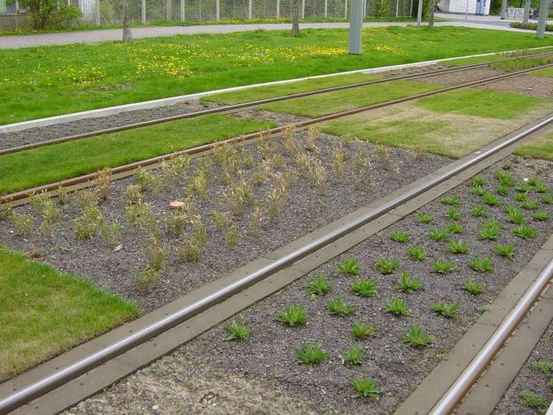 tram-on-grass-07