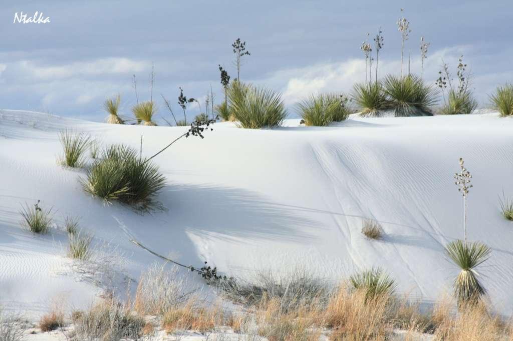 white-sands-10