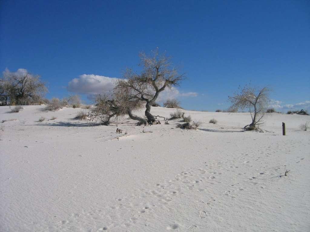 white-sands-16
