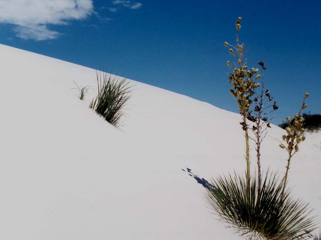 white-sands-17