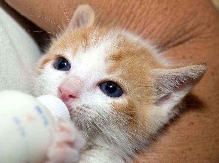 kitten-milk-03