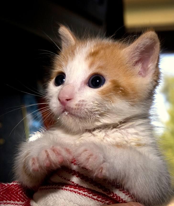 kitten-milk-06
