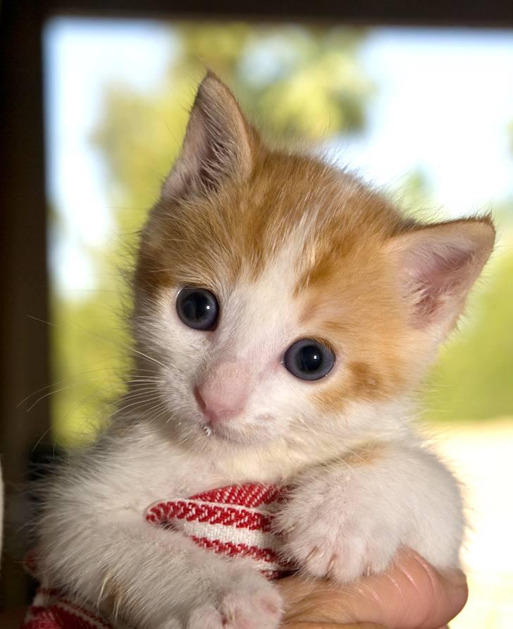 kitten-milk-07