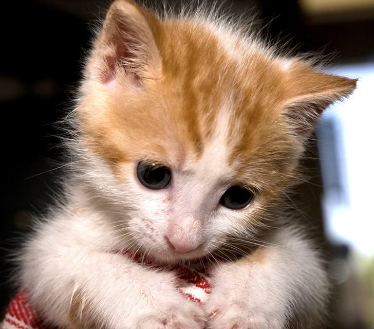 kitten-milk-08