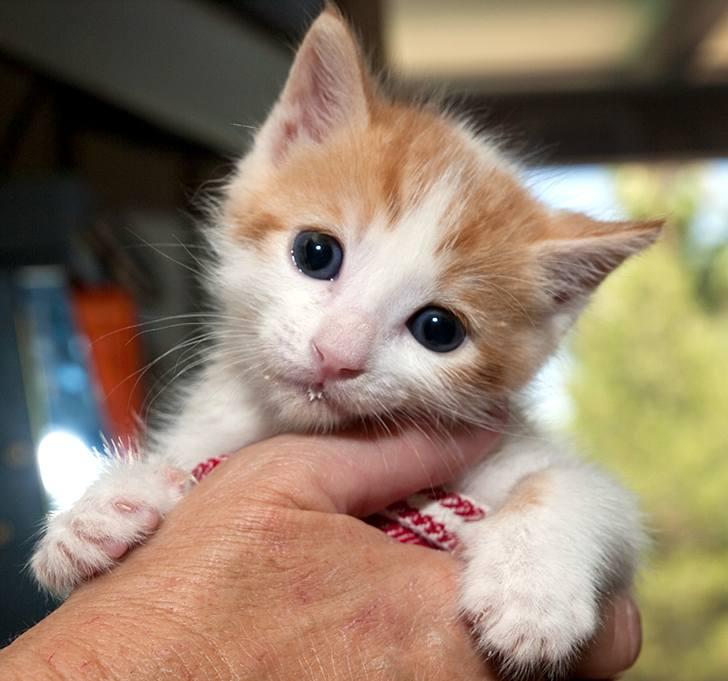 kitten-milk-09