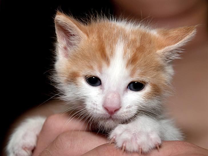 kitten-milk-11