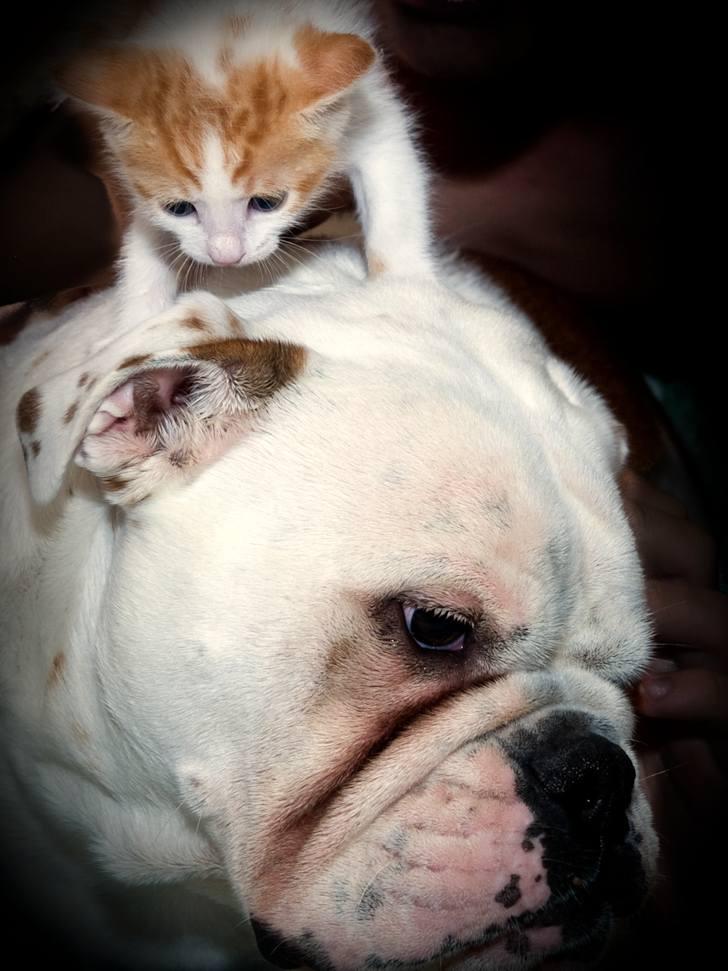 kitten-milk-13