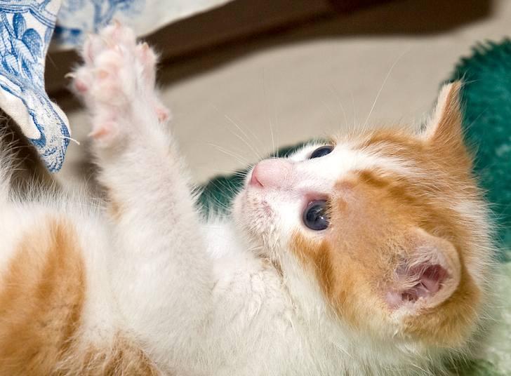 kitten-milk-14