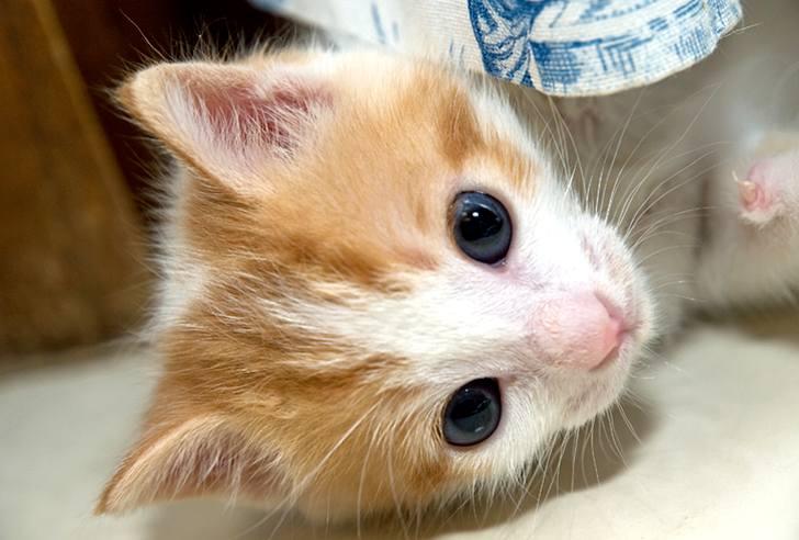 kitten-milk-15