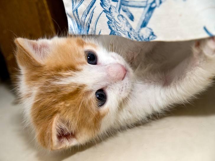 kitten-milk-16