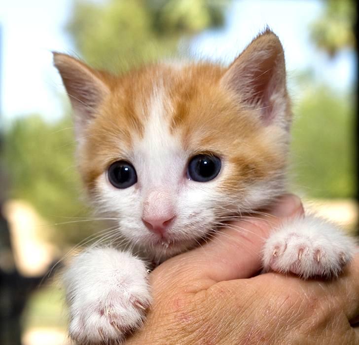 kitten-milk-17