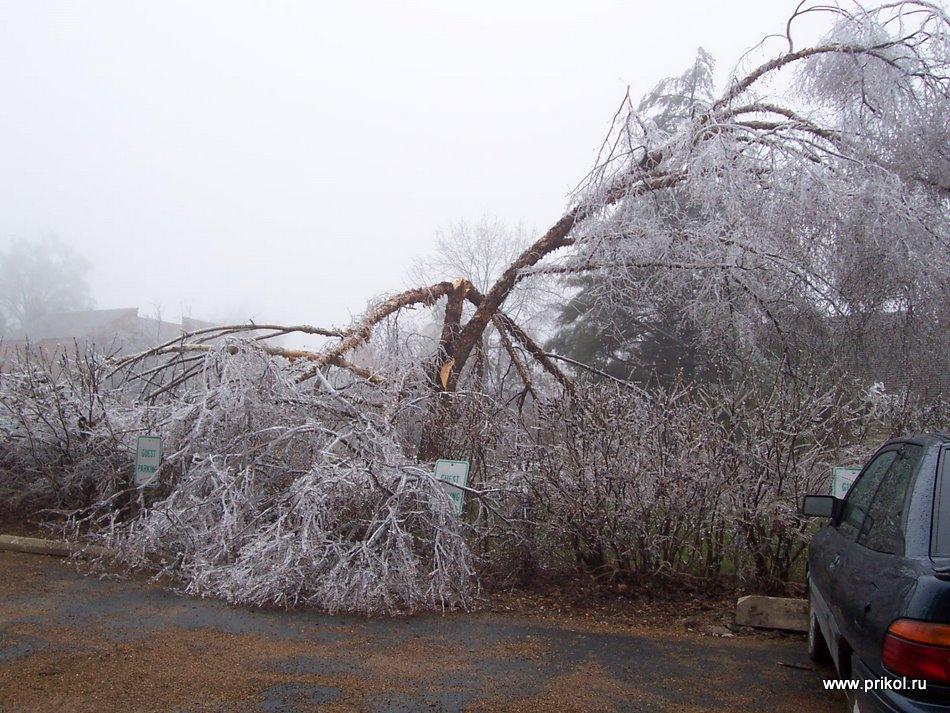 фото обледенелые машины деревья после шторма поводу