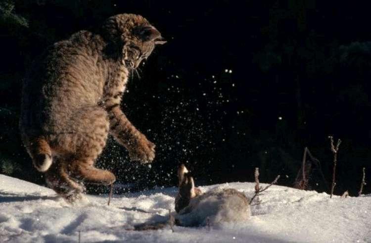 Охота на зайца (12 фото)