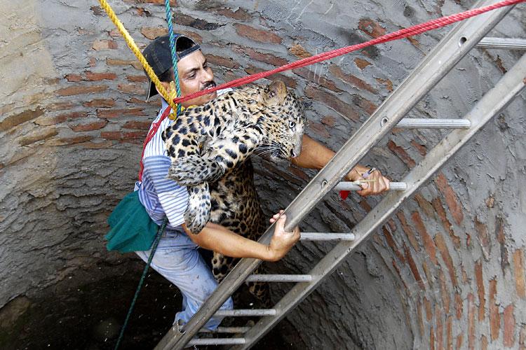 spasenie-leoparda-04