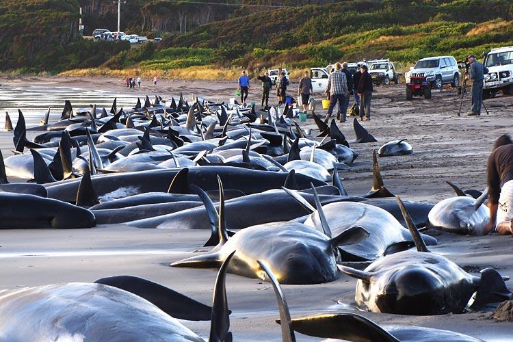 whales-delphines-01