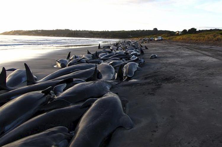 whales-delphines-02