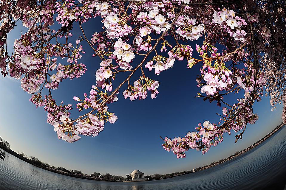 весна в Вашингтоне