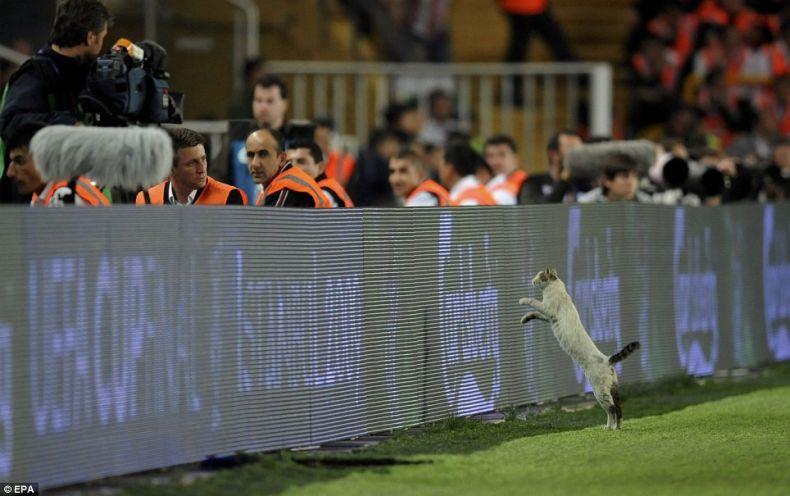 кот на кубке УЕФА