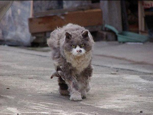 кот_зомби_cat03
