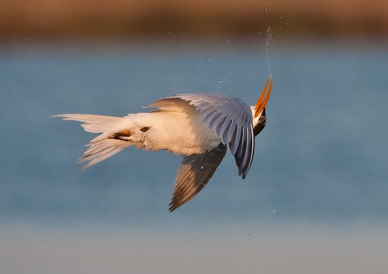 Картинка с птицей спасибо за внимание сковывает движений