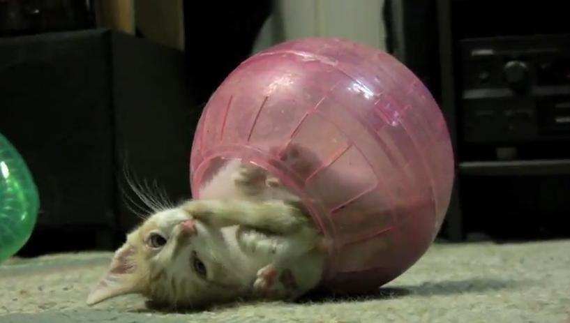 Котенок в шарике