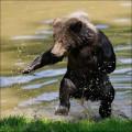 funny-bears-30