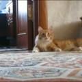 cat-get-away