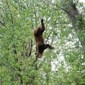 bear-25052012-04
