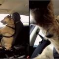 dog-drive