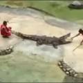 croc (1)