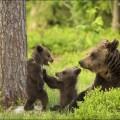 bear-cubs-005