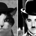 cat-avatar-001