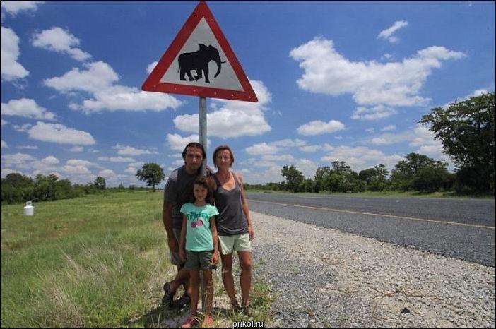 Слон напал на машину туристов