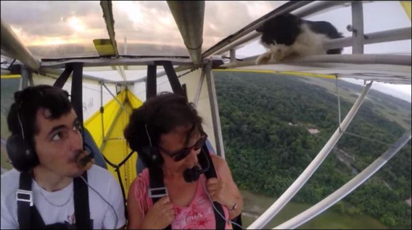 Кот совершил полет на крыле самолета!