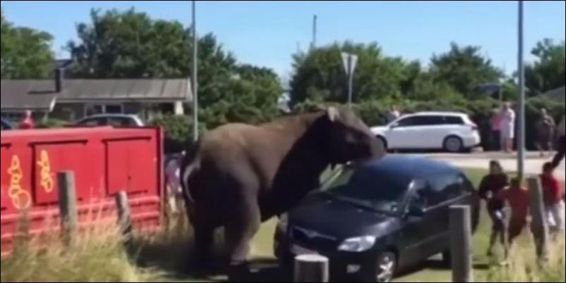 Цирковые слоны устроили переполох на пляже
