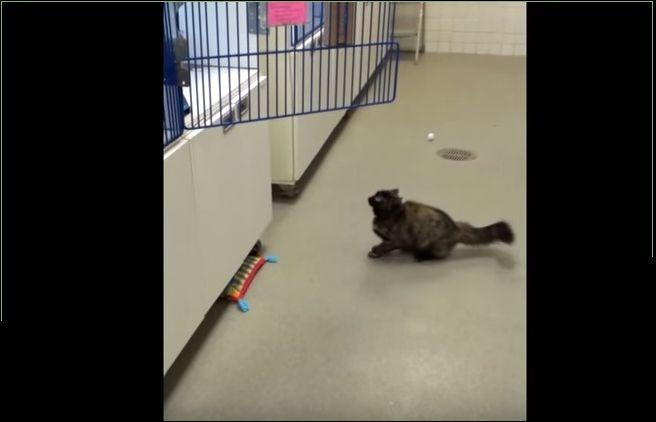 Кот на скользком полу не может прыгнуть